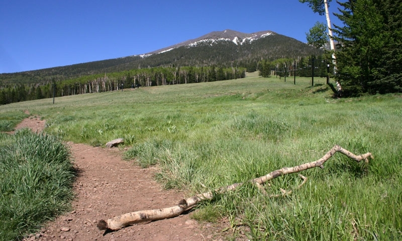 Hiking Trail into the San Francisco Peaks