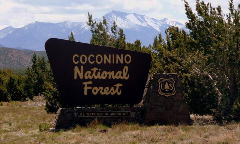 Coconino National Forest In Arizona Alltrips